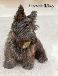 Ellen, will you please get me groomed, so I look like a real Scottie instead of a farm mutt?